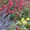 Colorado perennial garden close up